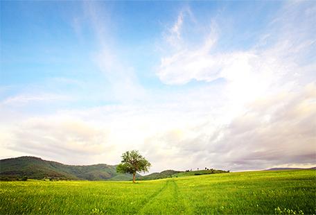 草原と青空と一本の木